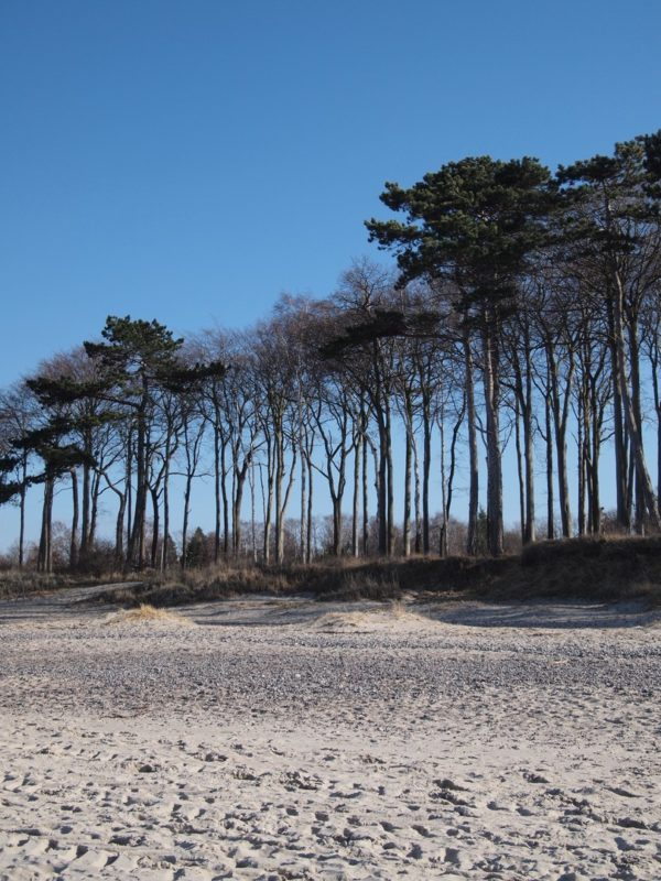 Tree lined beach at the Baltic Sea near Warnemünde shot with the Olympus PEN E-P1