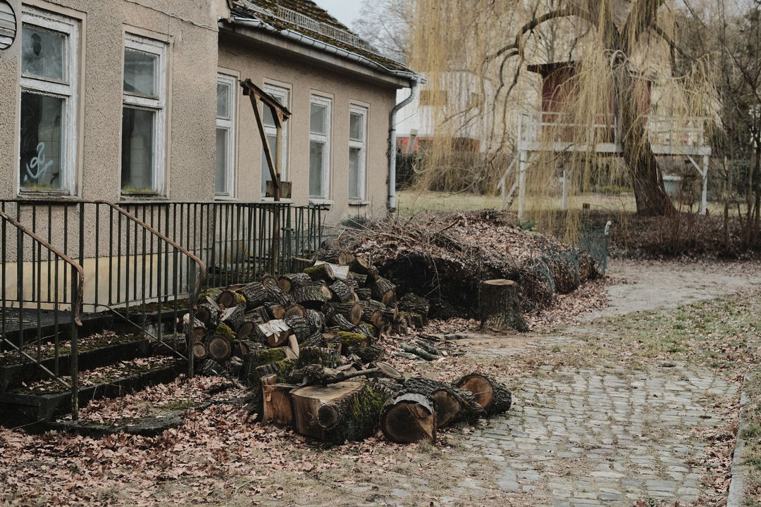 abandonded building with tree stumps