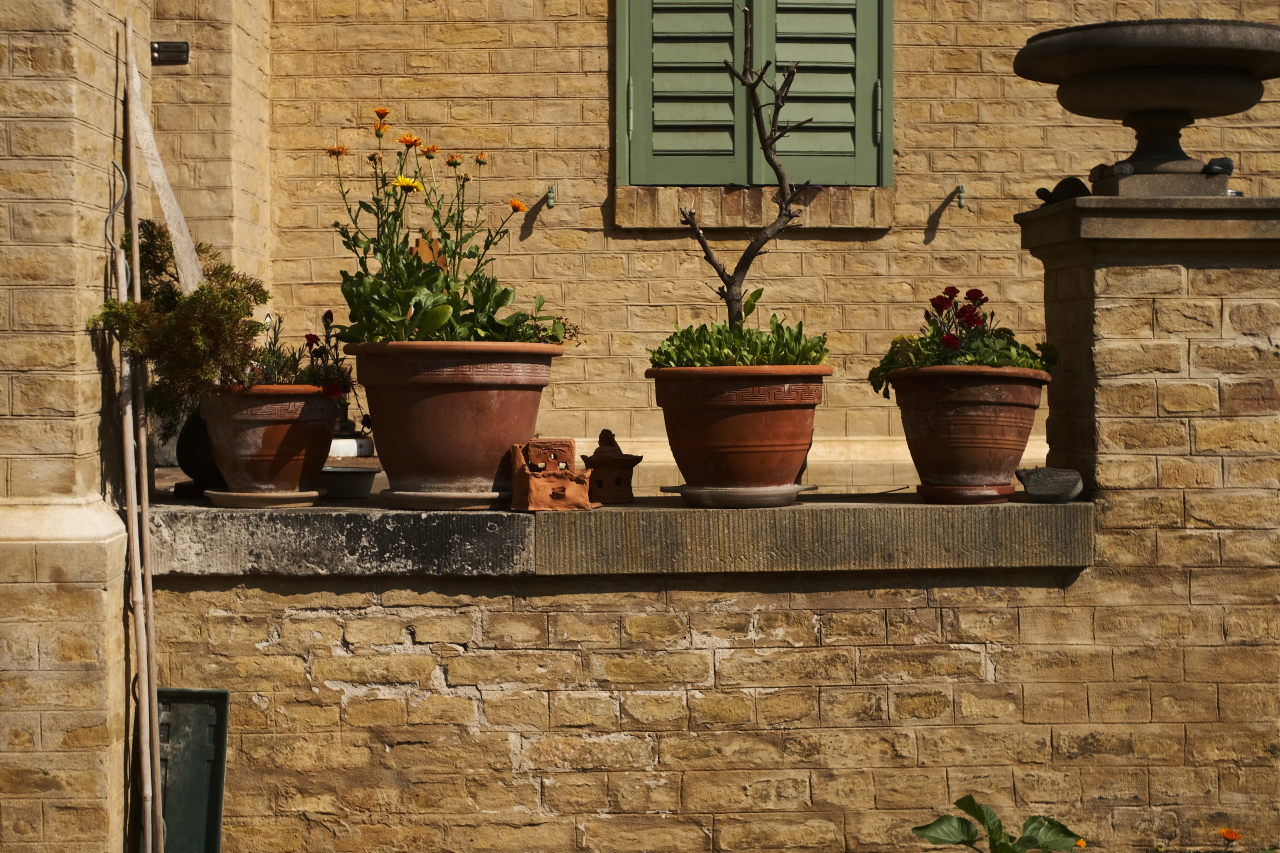 nicely arranged pots and plants